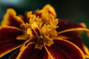 Neustadt-Glewe Blume 3