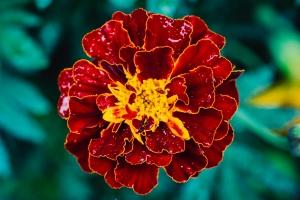 Neustadt-Glewe Blume 2